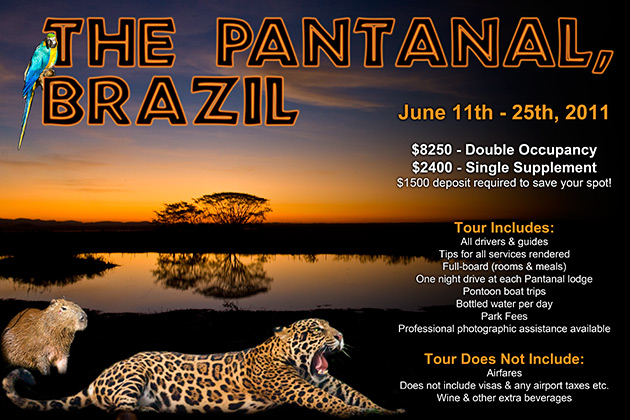 Pantanal Photography Workshops