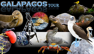 galapagos photography workshops