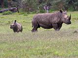Kenya photo