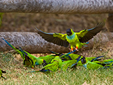 African Bird Photography